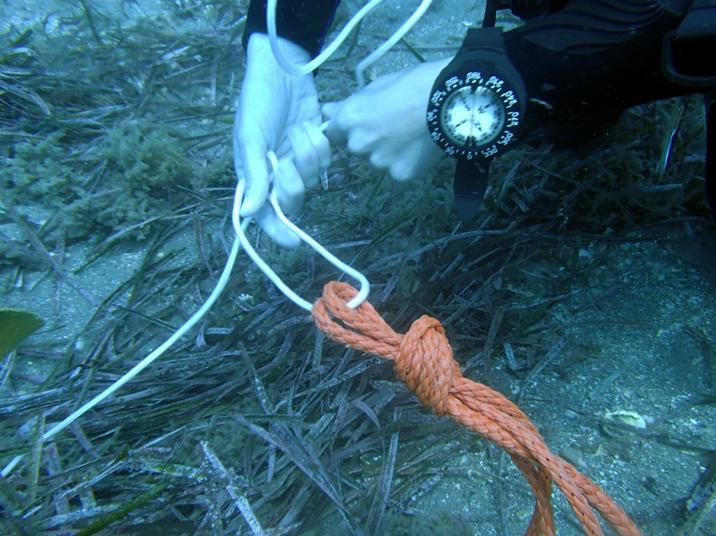 Specialyti Dive Courses