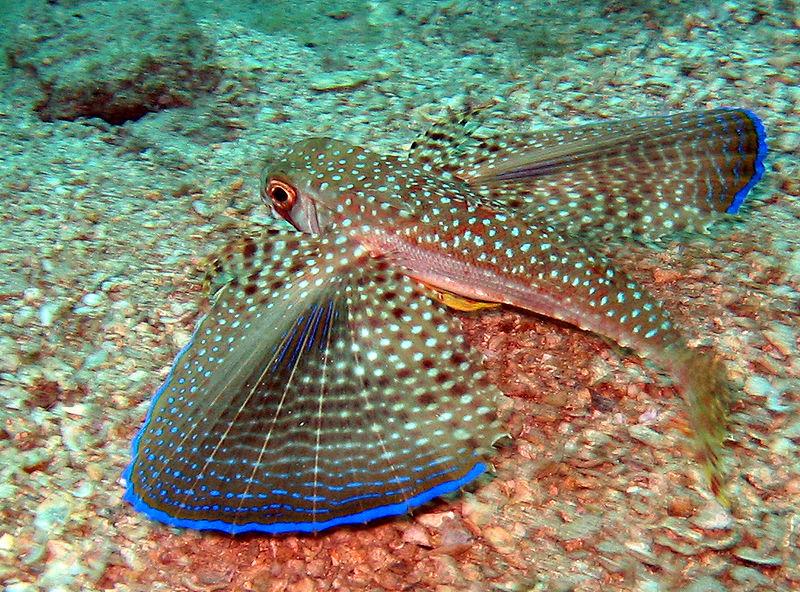 La golondrina de mar